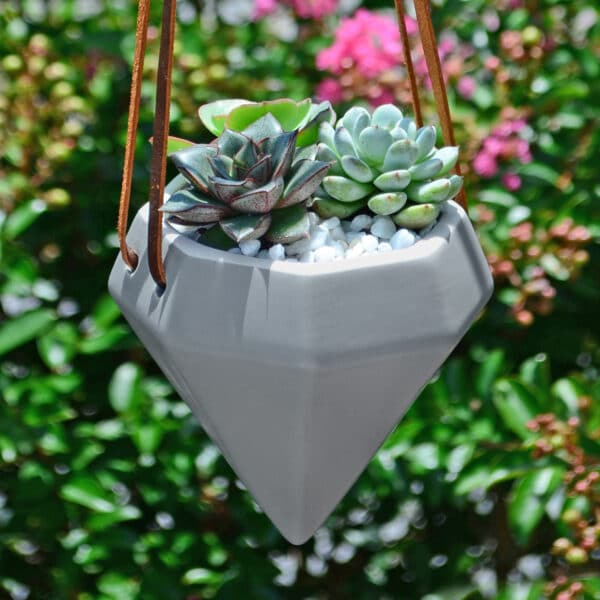 Air Planter with Succulents